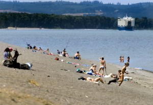 Sauvie Island in the summer